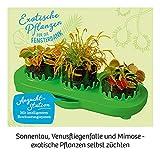 KOSMOS 632137 Fleischfressende Pflanzen, Insektenfresser selbst anpflanzen, Komplett-Set Anzucht-Station, Samen, Erde, Pipette, Experimentierkasten für Kinder ab 8 Jahren zu Garten, Biologie, Natur - 10